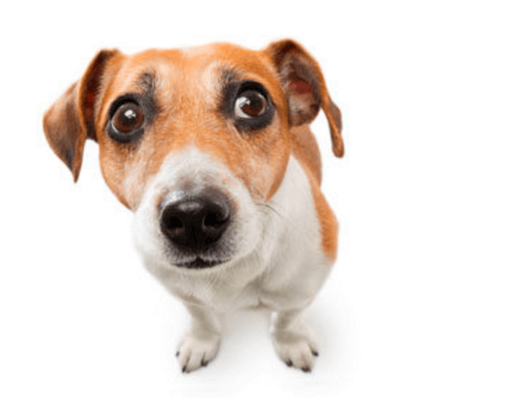 Pet Owner Education: CBD Oil for Anxiety